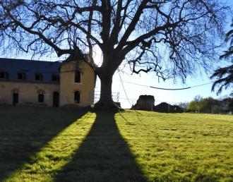 strom vzkříšení